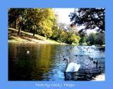 Cave Hill Lake.JPG