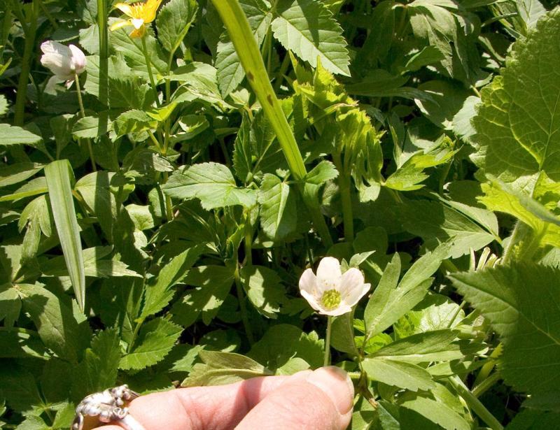 Flower in yard