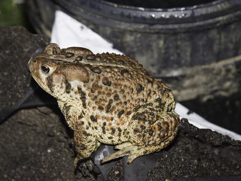 This toad