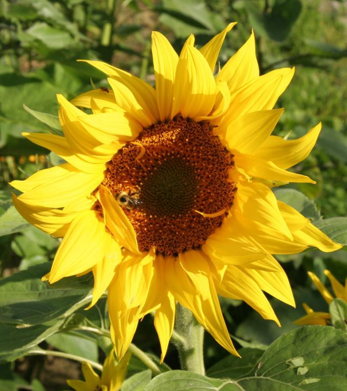 Sun on Yellow