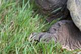 Turtle toenails