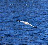 Gannets, gulls and other birds...