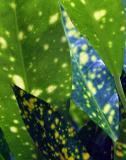 Leaves-010