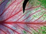 leaf-004