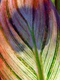 Leaf-016