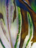 Leaf-017