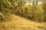 Mt. Pisgah hillside