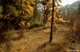 Beauty of Montana forests