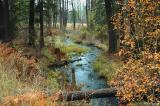 Woodland creek - Montana