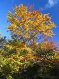 Fall and sky
