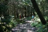 Descente forestière vers les Plagnes