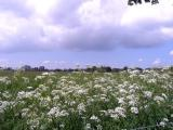 Ruinen, The netherlands