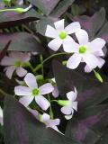 Propeller Flowers