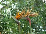 Eden 2005 - Temperate biome