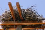 Close-up of Osprey nest