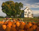 Autumn harvest 2005