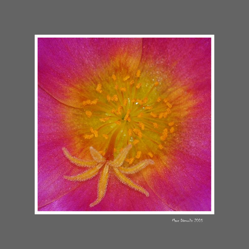 Floral 29