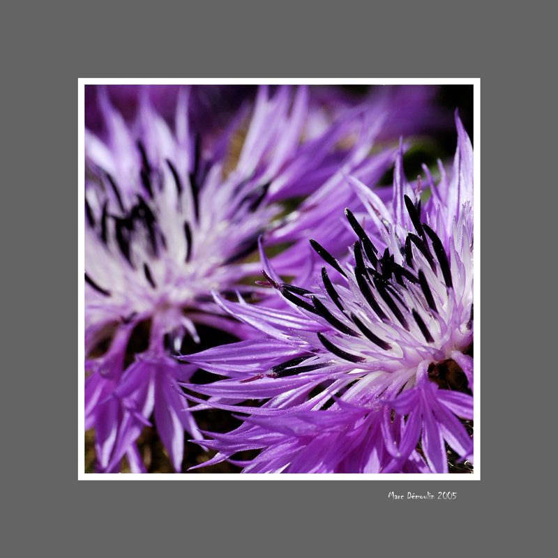 Floral 30