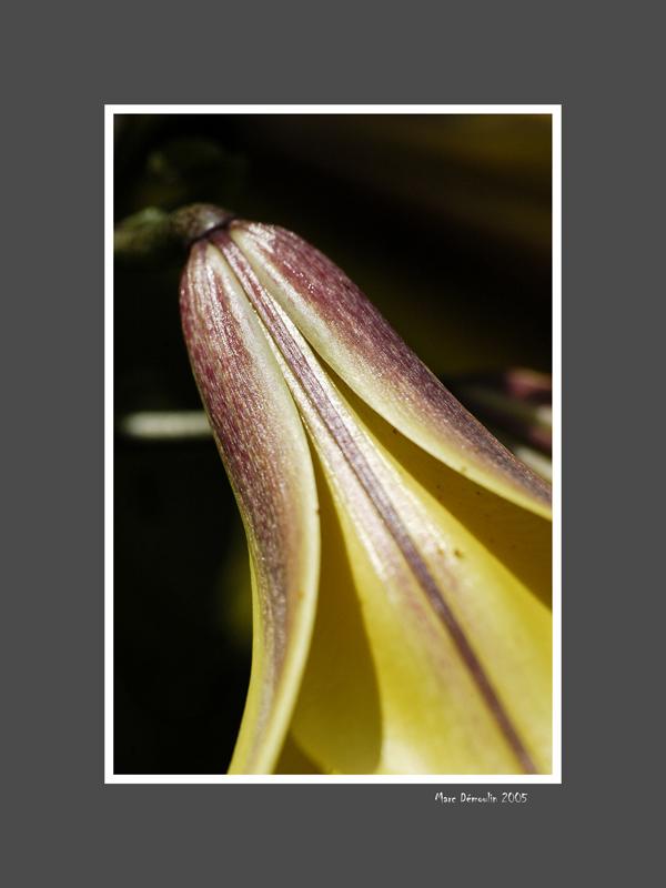 Floral 34