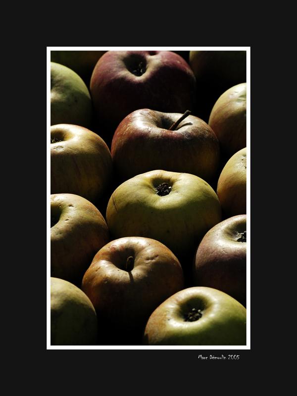Apples backlighting