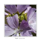 Pale violet flowers on the side of the road