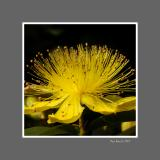 Floral 36
