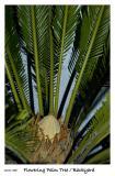 Palm Tree Flower