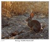 Bunny from Pichetti Ranch OSP