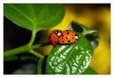 Ladybug Piggyback Rides