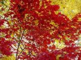 fall 05