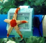 starfish5.jpg