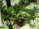 Kev Spence's garden in Leics (UK)