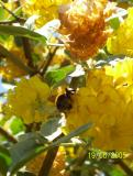 A Bee on the Pineapple Plant.jpg 2005