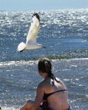 Cape Cod 2005