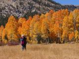 Fall In Northern California