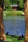 temple05jpg.jpg