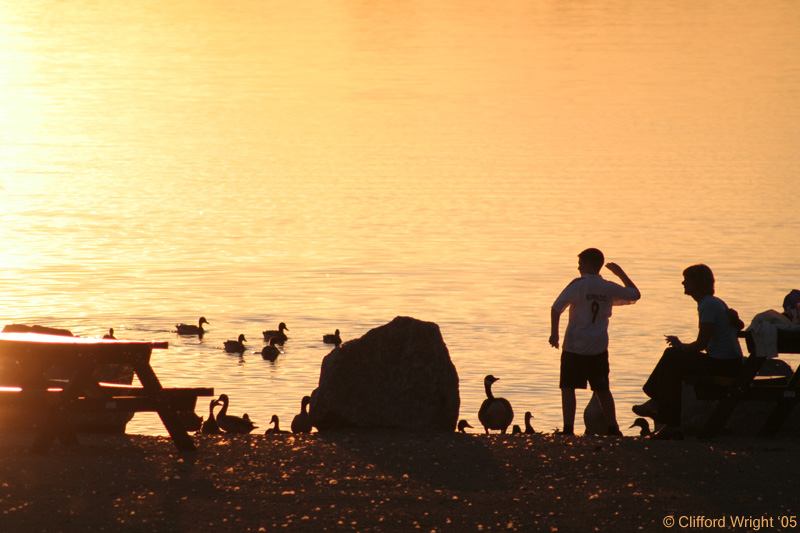 Family Feeding Ducks