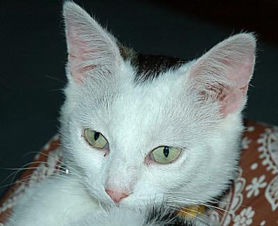 Cat a.jpg