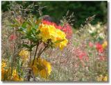 Dorothy Clive Gardens