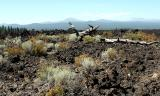 13 August - Bend, Or (Lava fields)