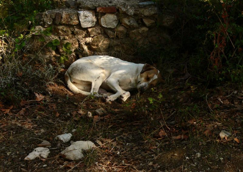 Asleep, Ancient Agora, Athens, Greece, 2005