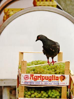 Italian grapes, Croatian pigeon, Dolac Market, Zagreb, Croatia, 2005