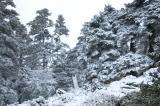 Vista de la Cañada del Cuerno. Sierra de las Nieves