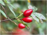 Buds of Autumn
