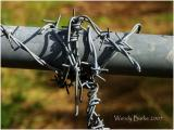 Barb wire , Keep us in or out ?