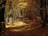 autumn way I