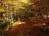 autumn way II