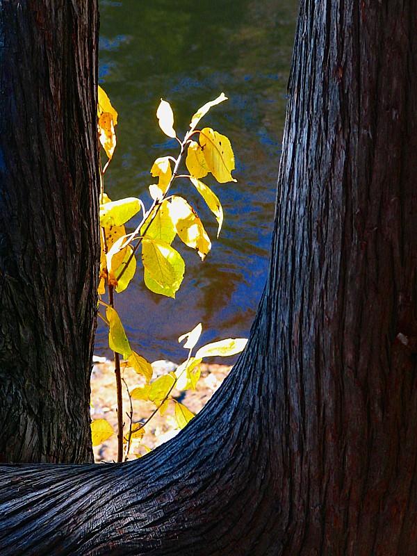 la branche entre les arbres