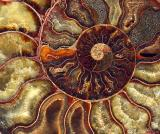 Ammonite crystaline