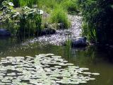 ruisseau bucolique